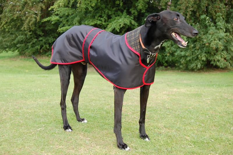 Dog Rain Coats In The Baxterboo Dog Rain Coats Shop | Dog Breeds ...