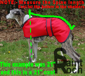 How To Measure your Greyhound